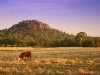 Dawn (the cow) at Hanging Rock.