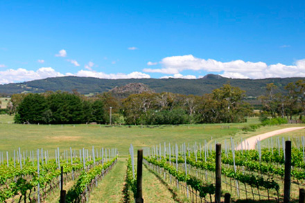Image: Nearby vineyards, looking back to Mount Macedon